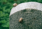 Thumbnail: Art From The Ashes - Snail on tombstone