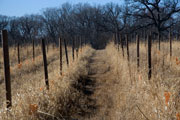 Thumbnail: Illinois River Winery - Vineyard in Winter
