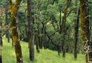 Thumbnail: Las Trampas Regional Wilderness - Trees #1